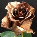 Роза Золотая (30-40 см.)