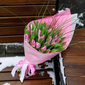 25 Тюльпанов берграсс