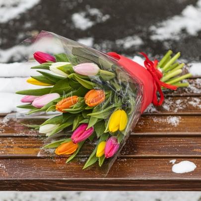 13 Разноцветных Тюльпанов