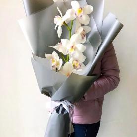Ветка Белой Орхидеи фото