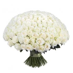 251 Белая Роза Premium (50/60 см.) фото
