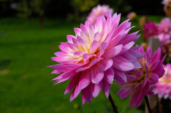 Оригинальные цветы