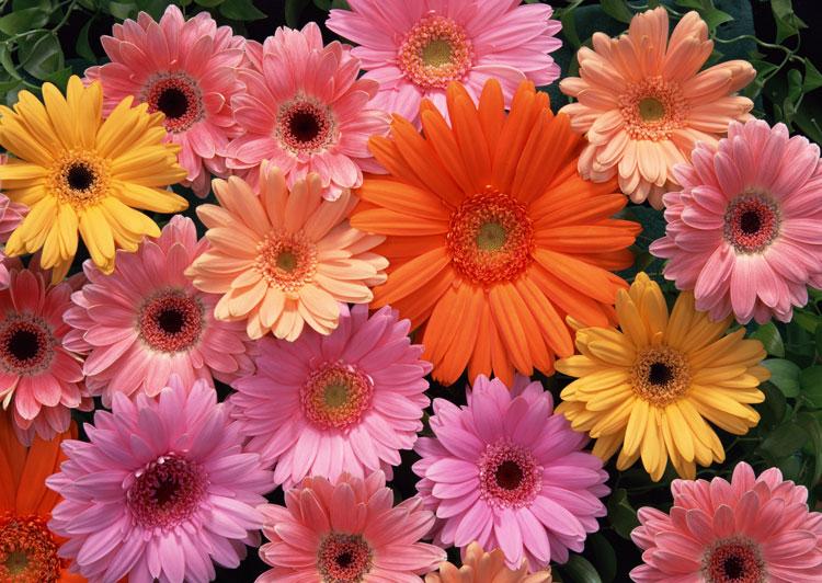 букет на 1 сентября какие цветы дарить учителям