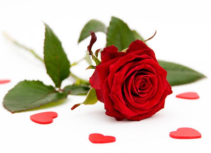 К чему дарят розы - значение белых, желтых, красных и других