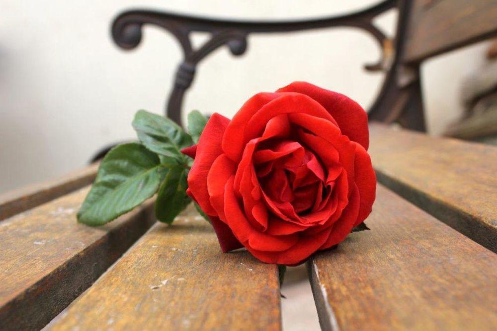 Одна роза в подарок