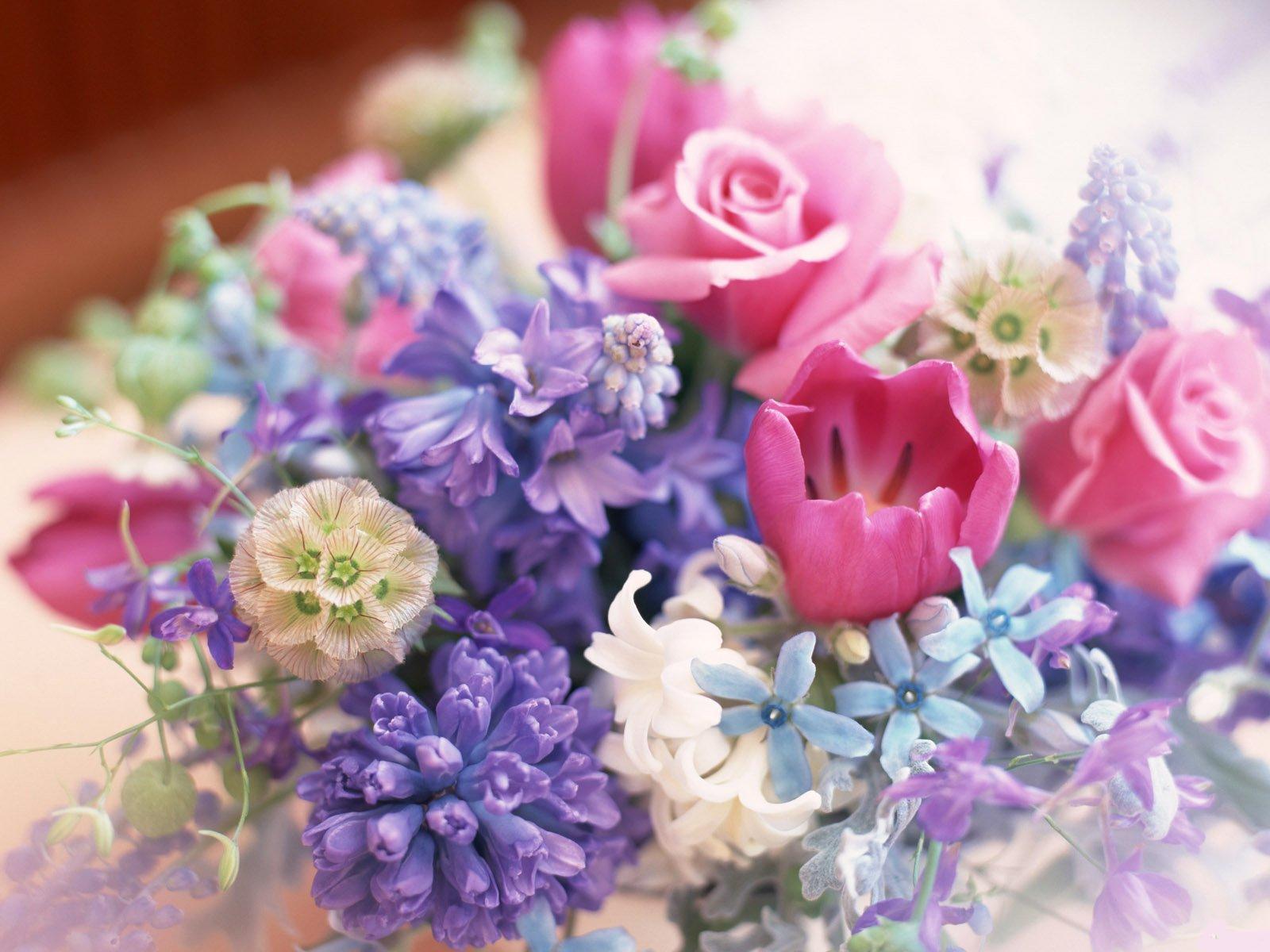 Овен знак зодиака какие цветы подходят