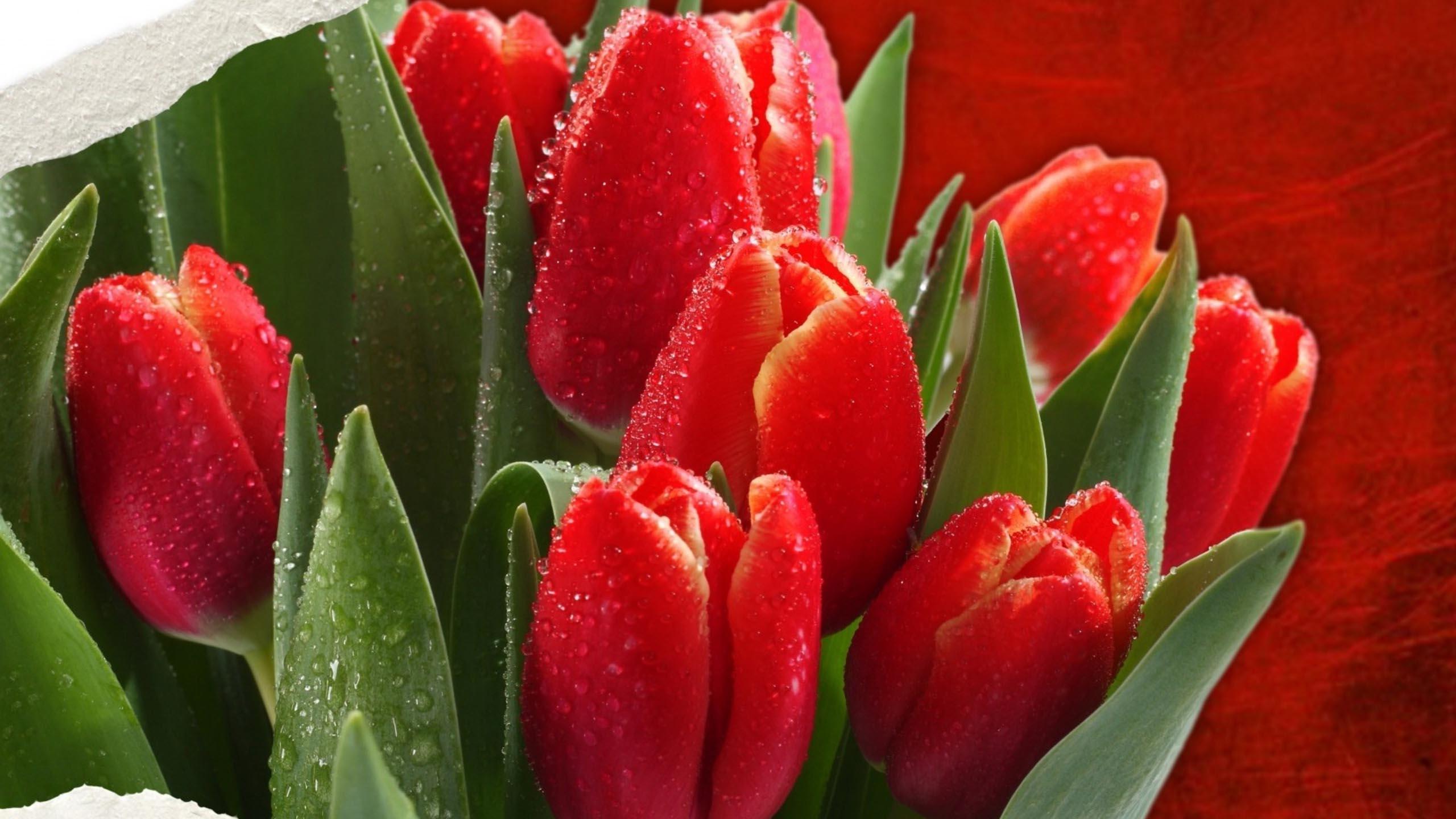 Обои цветы на рабочий стол  goodfonru