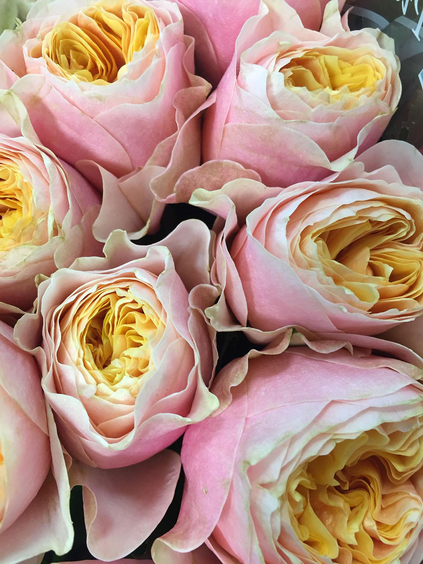 Букетов вызывающих купить синие цветы в москве оптом цветов дом одинцово